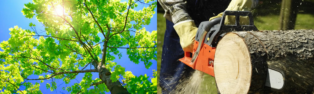 Tree Services Bellbrook